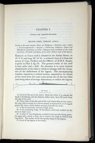 Image of Darwin-F271-1842-005