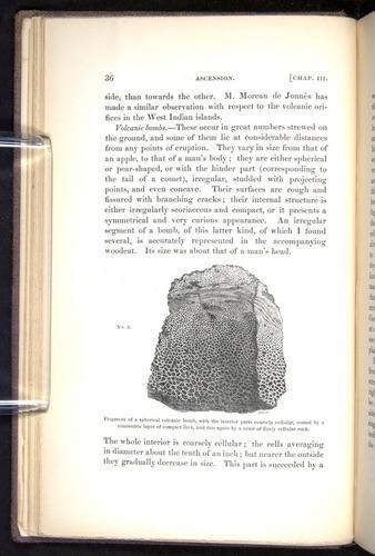 Image of Darwin-F272-1844-00036