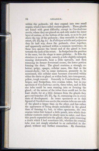 Image of Darwin-F339.1-1851-034