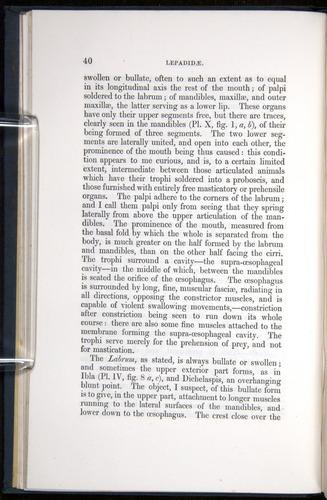 Image of Darwin-F339.1-1851-040