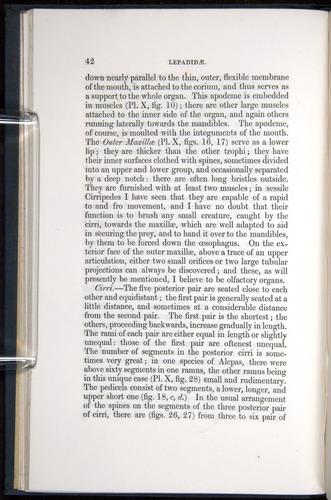 Image of Darwin-F339.1-1851-042