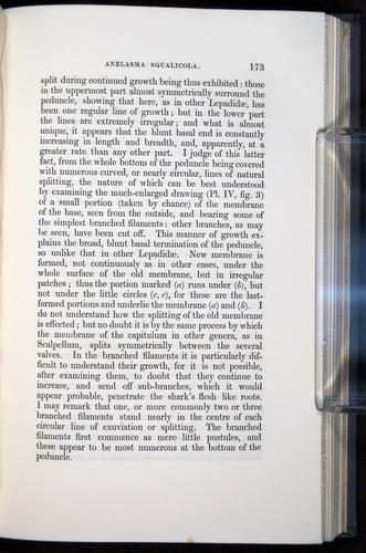 Image of Darwin-F339.1-1851-173