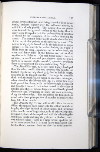 Image of Darwin-F339.1-1851-175