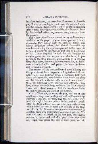 Image of Darwin-F339.1-1851-176