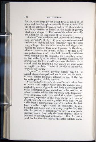Image of Darwin-F339.1-1851-184