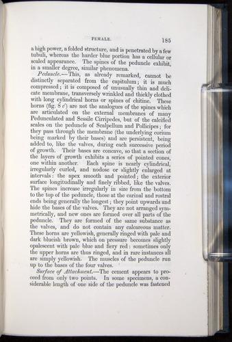 Image of Darwin-F339.1-1851-185
