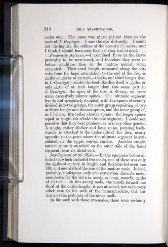 Image of Darwin-F339.1-1851-210