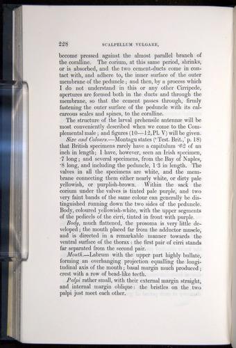 Image of Darwin-F339.1-1851-228