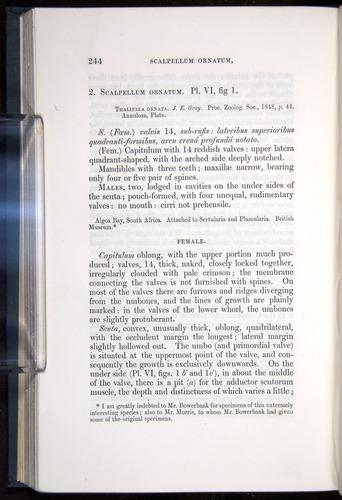 Image of Darwin-F339.1-1851-244