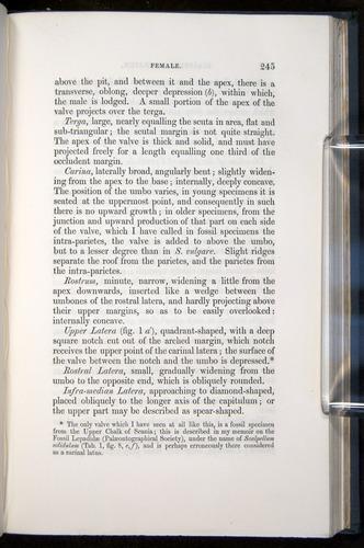 Image of Darwin-F339.1-1851-245