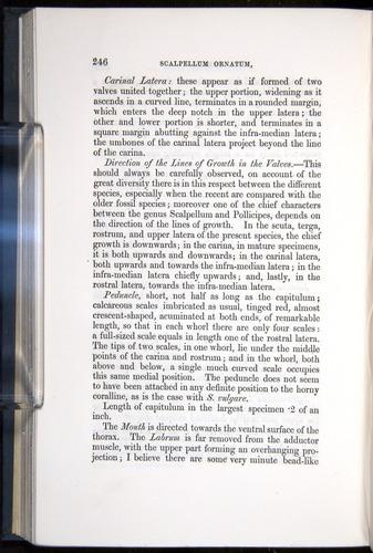 Image of Darwin-F339.1-1851-246