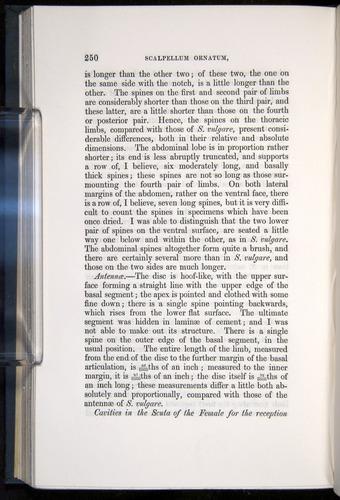Image of Darwin-F339.1-1851-250