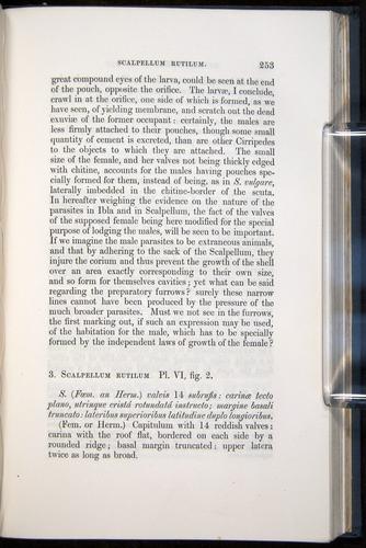 Image of Darwin-F339.1-1851-253