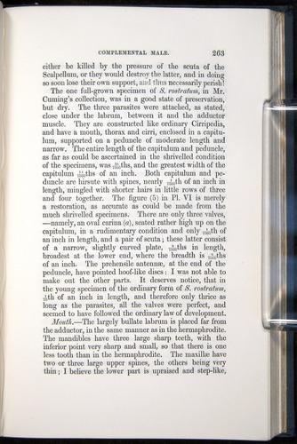 Image of Darwin-F339.1-1851-263