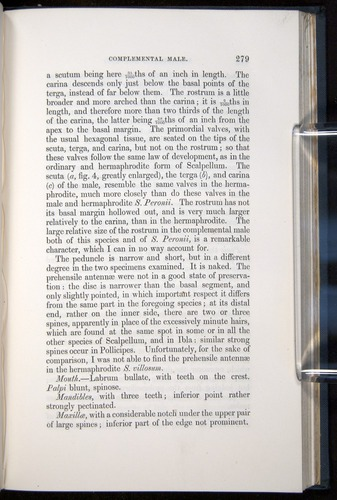 Image of Darwin-F339.1-1851-279