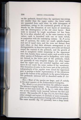 Image of Darwin-F339.1-1851-296