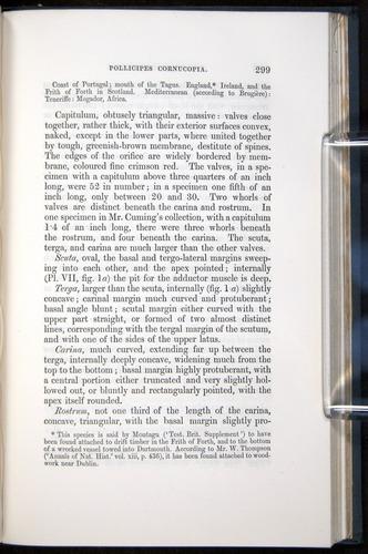 Image of Darwin-F339.1-1851-299