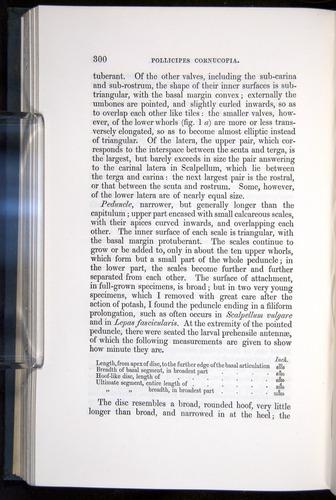 Image of Darwin-F339.1-1851-300
