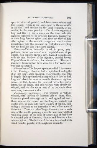 Image of Darwin-F339.1-1851-301