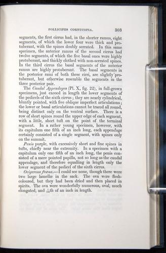Image of Darwin-F339.1-1851-303