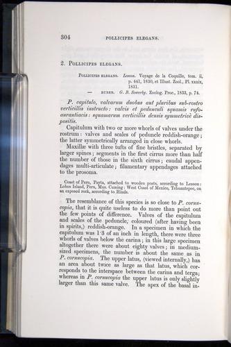 Image of Darwin-F339.1-1851-304
