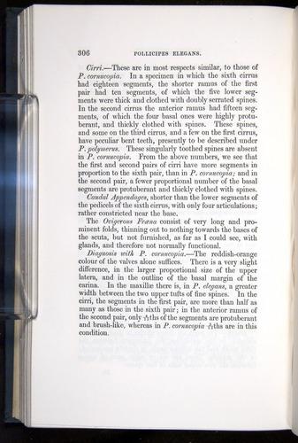 Image of Darwin-F339.1-1851-306