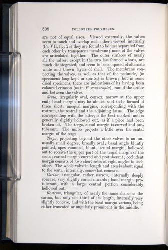 Image of Darwin-F339.1-1851-308