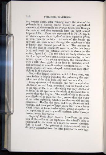 Image of Darwin-F339.1-1851-310