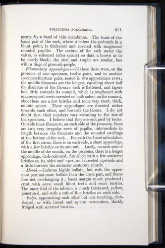 Image of Darwin-F339.1-1851-311