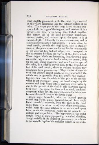 Image of Darwin-F339.1-1851-318
