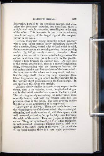 Image of Darwin-F339.1-1851-319