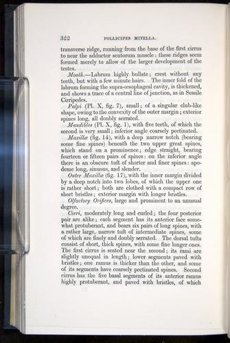 Image of Darwin-F339.1-1851-322