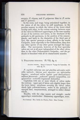 Image of Darwin-F339.1-1851-324