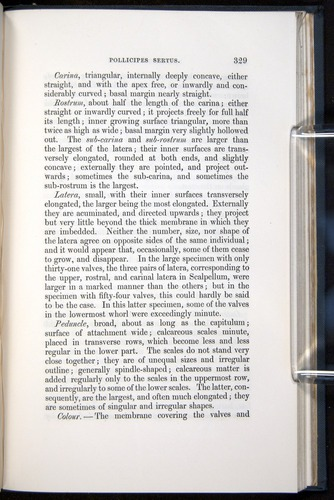 Image of Darwin-F339.1-1851-329