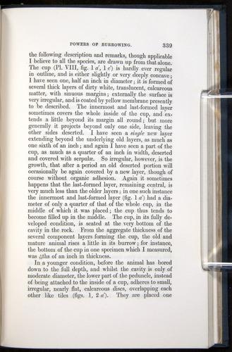 Image of Darwin-F339.1-1851-339