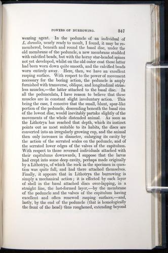 Image of Darwin-F339.1-1851-347