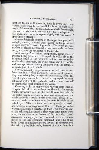 Image of Darwin-F339.1-1851-361