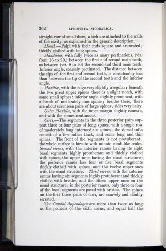 Image of Darwin-F339.1-1851-362