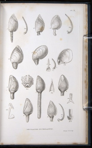 Image of Darwin-F339.1-1851-zzz-f03r