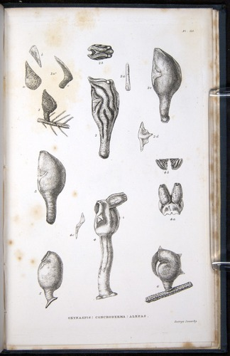 Image of Darwin-F339.1-1851-zzz-f04r