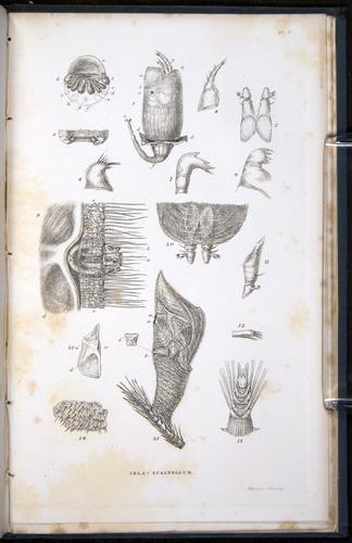 Image of Darwin-F339.1-1851-zzz-f06r
