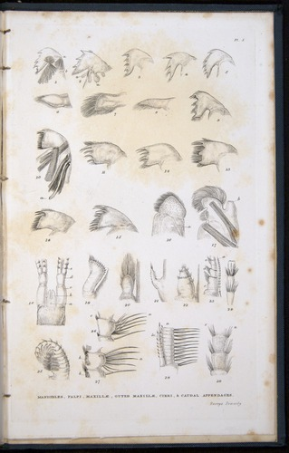 Image of Darwin-F339.1-1851-zzz-f11r