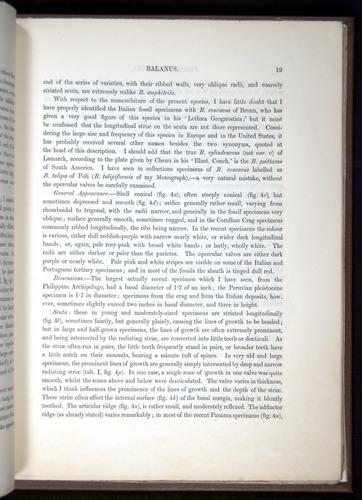 Image of Darwin-F342.2-1854-00019