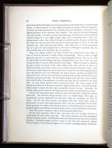 Image of Darwin-F342.2-1854-00020