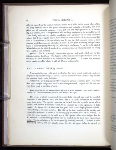 Image of Darwin-F342.2-1854-00028