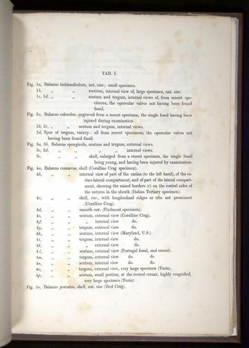 Image of Darwin-F342.2-1854-zzzzz-a03