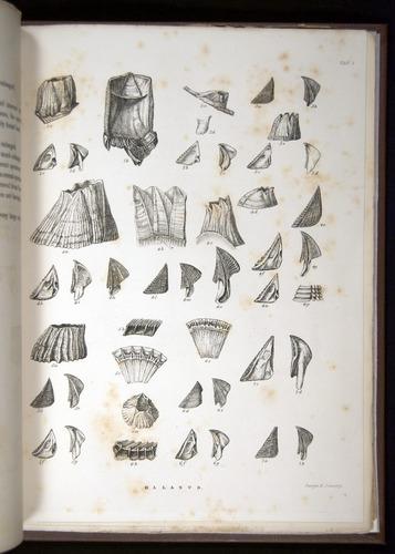 Image of Darwin-F342.2-1854-zzzzz-a04-f01