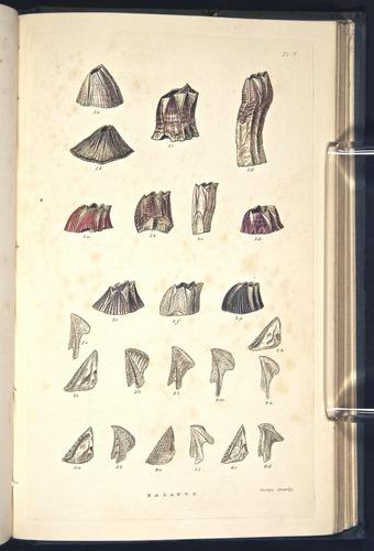 Image of Darwin-F339.2-1854-zzz-f05