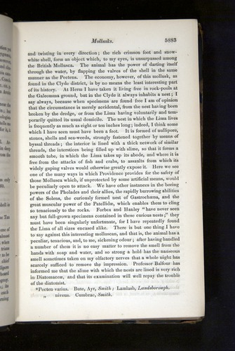 Image of Darwin-F349-1858-Zoologist-v16-05883