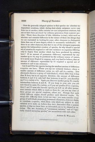 Image of Darwin-F349-1858-Zoologist-v16-05888